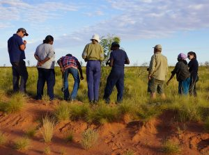 Kidson Track flora survey June 2014