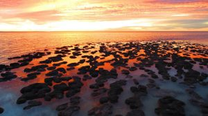 sunset-stromatolites